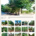 Lidyoff Specimen Tree Growers Nursery