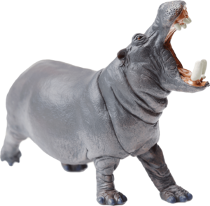 hippopotamus groaning